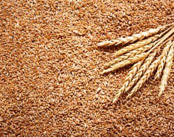 Cereal Grains II